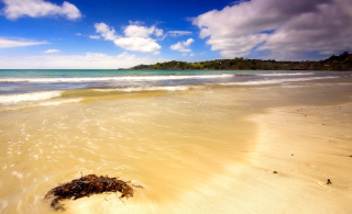 Mauritius Beach Picture for Android, iPhone and iPad