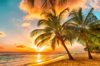 Tropical Paradise Beach Wallpaper for Android, iPhone and iPad