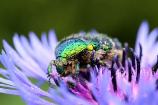 Free Macro Blur Photo with Bug Picture for Android, iPhone and iPad