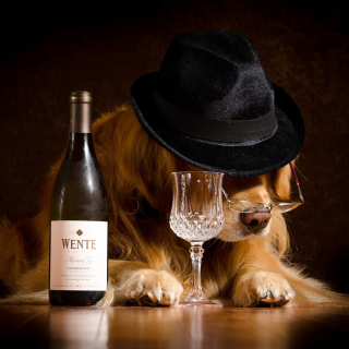 Wine and Dog - Fondos de pantalla gratis para iPad 2