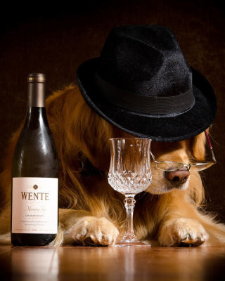 Wine and Dog Picture for Nokia Asha 306