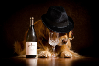 Wine and Dog Picture for Widescreen Desktop PC 1920x1080 Full HD