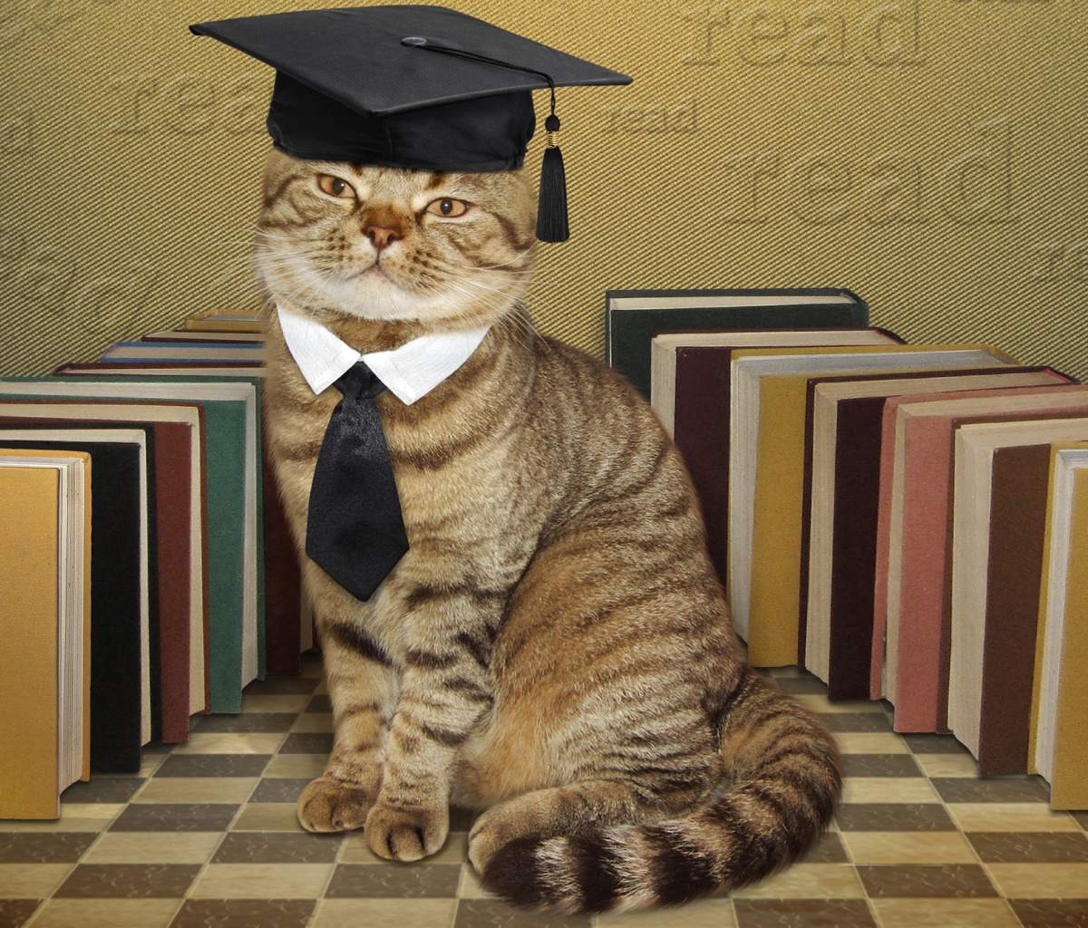 Screenshot №1 pro téma Clever cat with Books 1200x1024