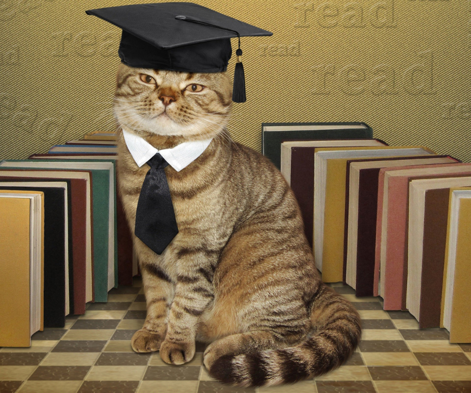Clever cat with Books wallpaper 960x800