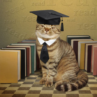 Clever cat with Books - Fondos de pantalla gratis para iPad 2