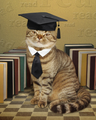 Free Clever cat with Books Picture for Nokia Asha 311