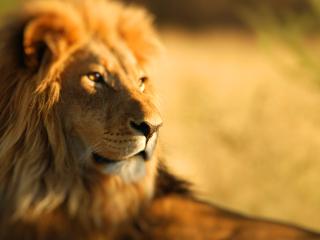 King Lion para LG 900g