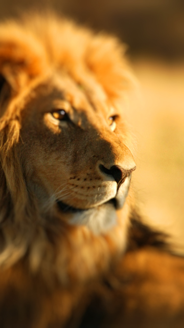 King Lion for Nokia C5-05