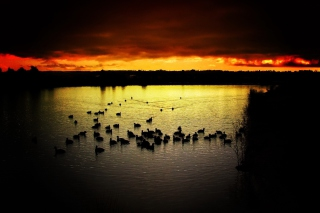 Ducks On Lake At Sunset - Obrázkek zdarma