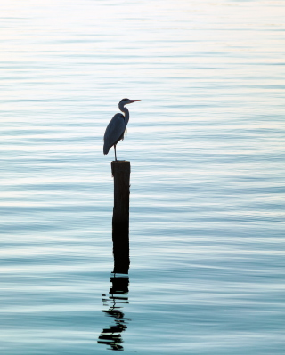 Lonely Bird Wallpaper for iPhone 4S