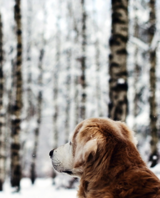 Обои Dog Looking At Winter Landscape для Nokia C-Series