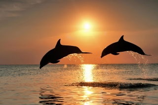 Dolphins At Sunset sfondi gratuiti per cellulari Android, iPhone, iPad e desktop