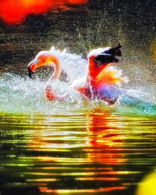 Free Flamingo Splash Picture for iPhone 6 Plus