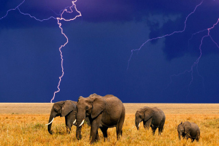 African Elephants Wallpaper for Android, iPhone and iPad
