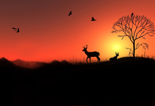 Deer Silhouettes At Red Sunset Background for Android, iPhone and iPad