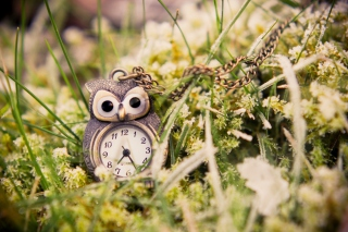 Owl Watch Pendant Wallpaper for Android, iPhone and iPad