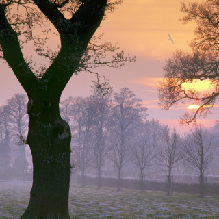 Winter Morning Background for iPad 2