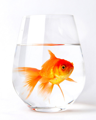 Free Goldfish in Glass Picture for Nokia C1-01