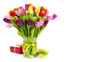 Tulips Bouquet and Gift Background for Android, iPhone and iPad