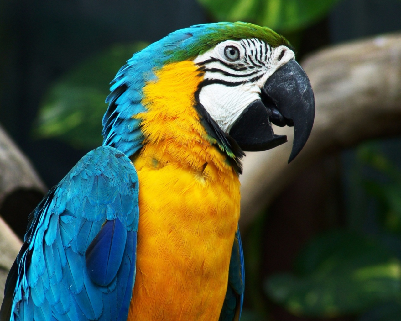 Screenshot №1 pro téma Blue And Yellow Macaw 1280x1024
