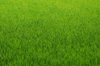 Free Green Grass Picture for Android, iPhone and iPad