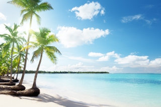 Paradise Beach Background for Android, iPhone and iPad