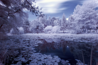 Frozen Pond Background for Android, iPhone and iPad