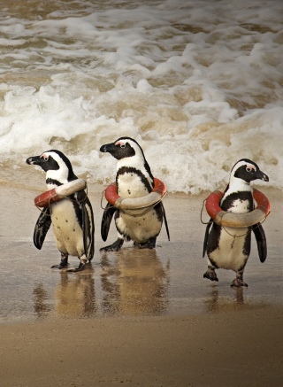 Free Funny Penguins Wearing Lifebuoys Picture for Nokia C5-05