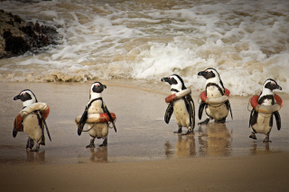 Funny Penguins Wearing Lifebuoys Picture for Android, iPhone and iPad