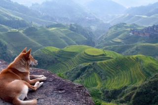 Dog Looking Down At Green Hills sfondi gratuiti per cellulari Android, iPhone, iPad e desktop