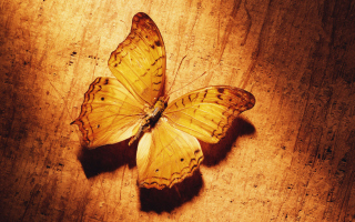 Glitter Gold Butterfly Background for Android, iPhone and iPad