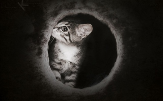 Black And White Kitten Background for LG P970 Optimus