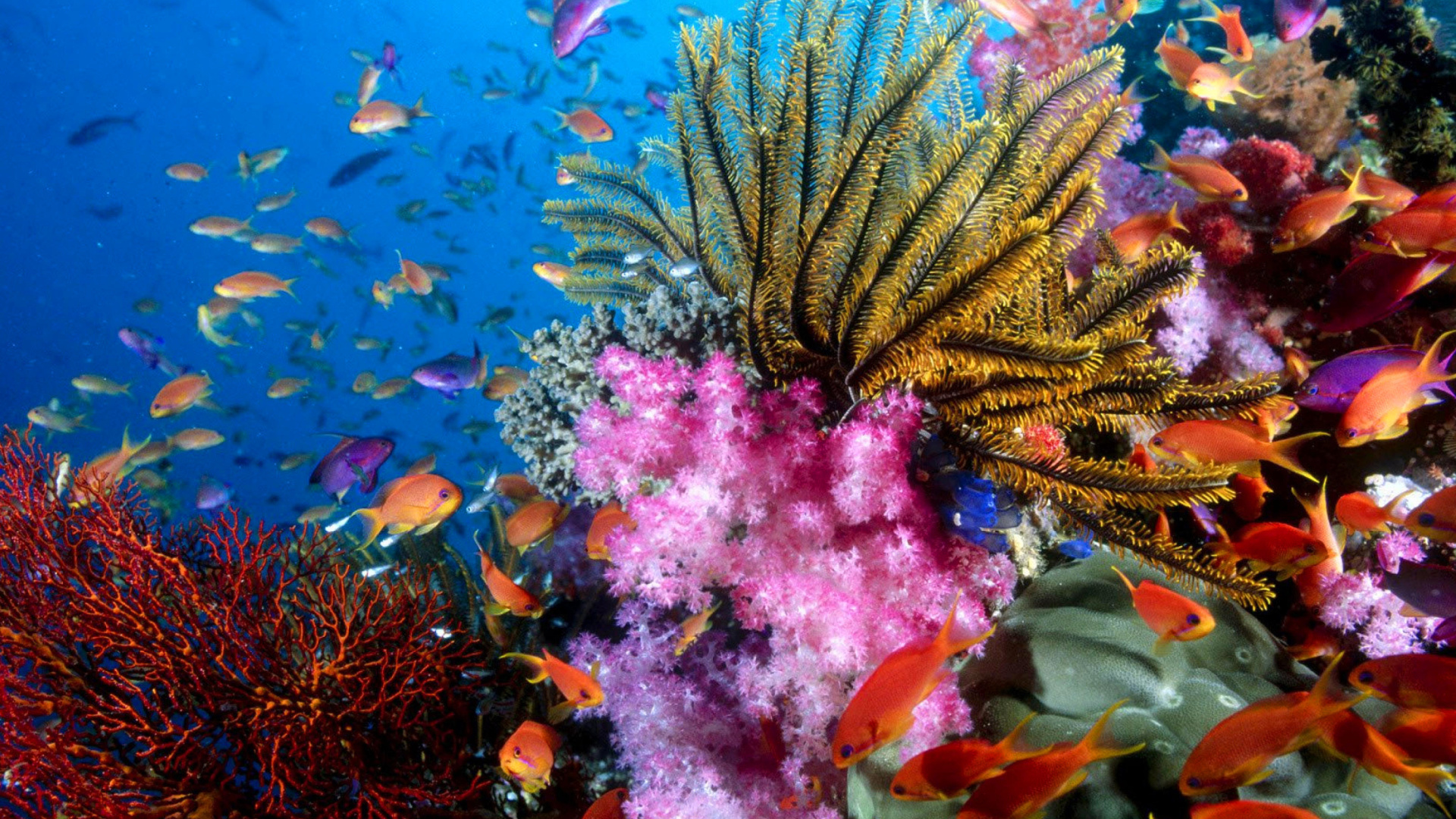 Aquarium World with Coral Reef Wallpaper for Desktop ...  Coral Reef Wallpaper 1920x1080