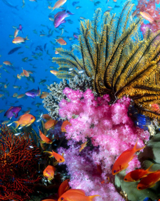 Free Aquarium World with Coral Reef Picture for Nokia C1-01