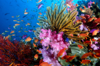 Free Aquarium World with Coral Reef Picture for 220x176
