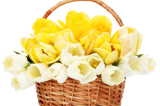Spring Tulips in Basket Background for Android, iPhone and iPad
