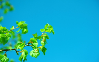 Free Branch In Blue Picture for Android, iPhone and iPad