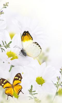Butterfiles para Samsung GT-S5230 Star