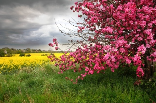 Spring Field Wallpaper for Android, iPhone and iPad