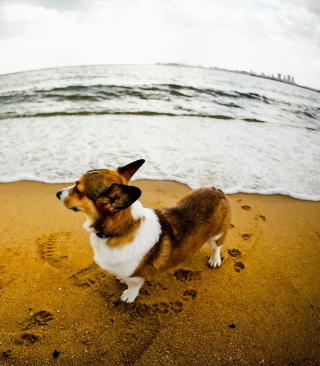 Dog On Beach Background for Nokia C1-01