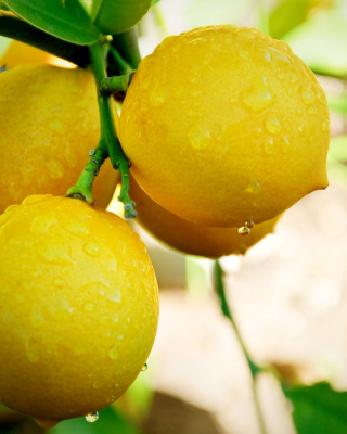 Lemon Drops Wallpaper for iPhone 6 Plus