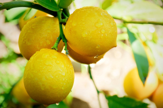 Lemon Drops Background for Android, iPhone and iPad