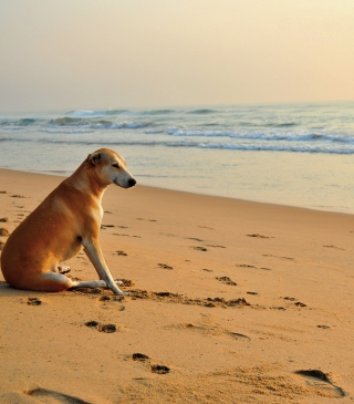 Free Ginger Dog Looking At Sea Picture for 240x320