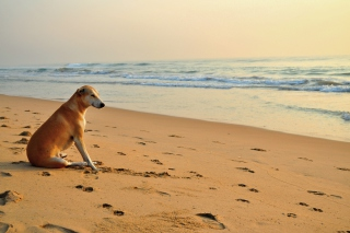 Ginger Dog Looking At Sea sfondi gratuiti per cellulari Android, iPhone, iPad e desktop