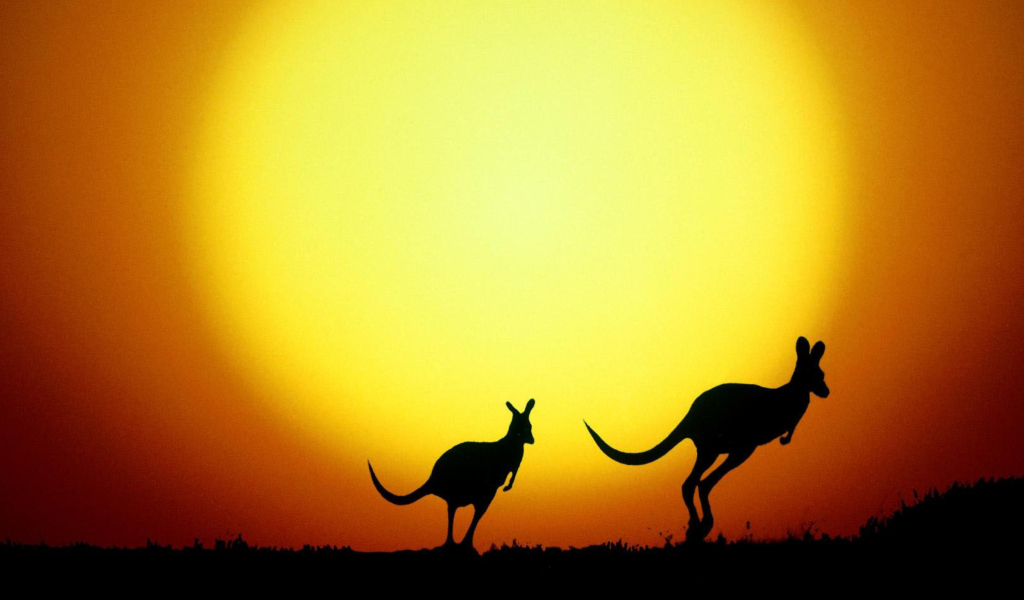 Screenshot №1 pro téma Kangaroo At Sunset 1024x600