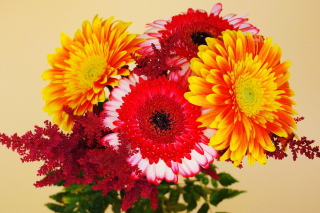 Free Gerbera Wedding Bouquet Picture for Android, iPhone and iPad