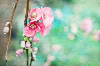 Spring Flowers Vintage Effect Picture for Android, iPhone and iPad