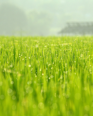 Bokeh Green Grass Wallpaper for Nokia Asha 310