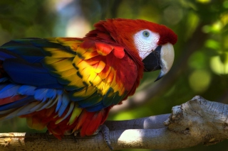 Gorgeous Parrot Picture for Android, iPhone and iPad