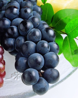 Free Grapes Picture for Nokia Asha 306
